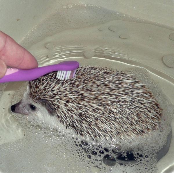 bath_time_20120405_00613_001