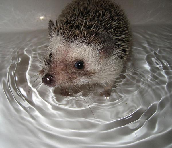 bath_time_20120405_00613_003