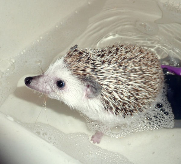 bath_time_20120405_00613_006