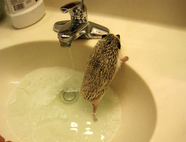 bath_time_20120405_00613_023