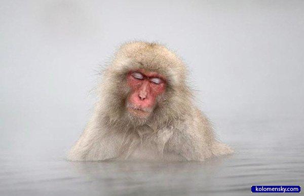 1263970319_5_monkey_kolomensky_com