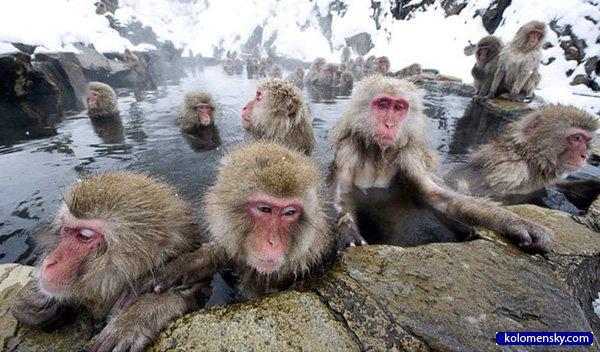 1263970322_9_monkey_kolomensky_com