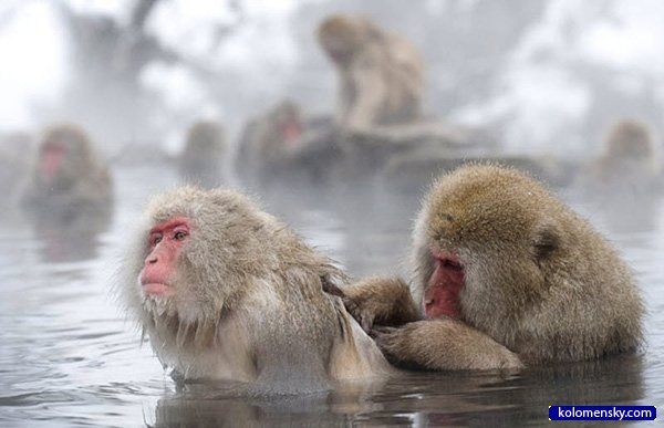 1263970329_1_monkey_kolomensky_com