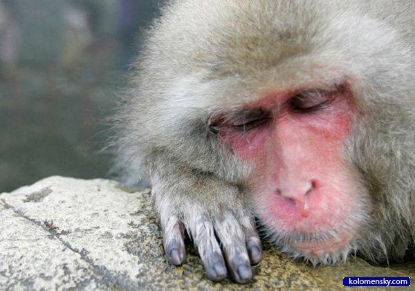 1263970336_2_monkey_kolomensky_com