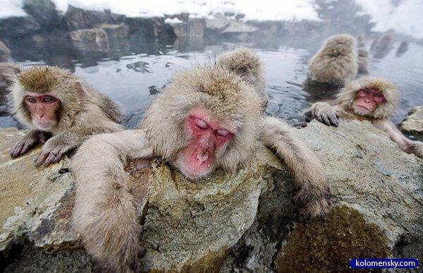 1263970355_3_monkey_kolomensky_com